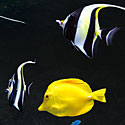 Photo  de © DR - Aquarium de La Rochelle, nouveau site Internet