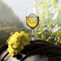 Photo  de ©  DR Rotary La Rochelle Atlantique - Salon vins bio et viticulteurs indépendants 2-3 mars 2013