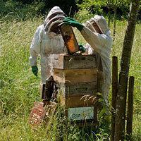 Photo  de ©  DR Un toit pour les abeilles